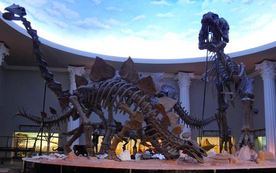 Fosil Dinosaurus di Museum Satwa, Jatimpark 2